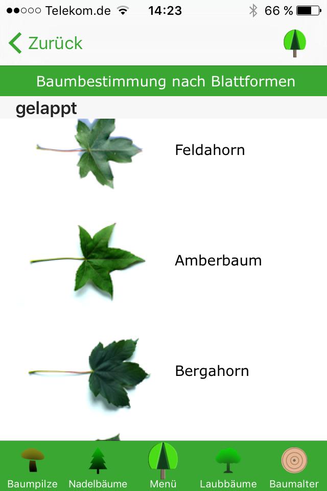 Laubbäume übersicht blätter Laubbäume: Arten